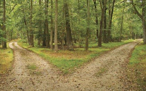 Bifurcación en un sendero del bosque